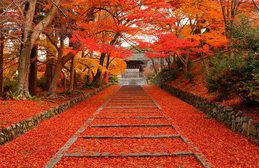 京都 紅葉 画像