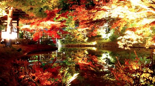 高台寺 紅葉 画像
