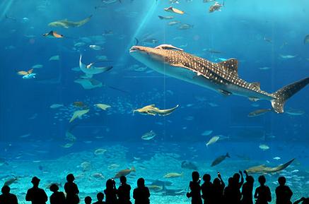 沖縄美ら海水族館 画像